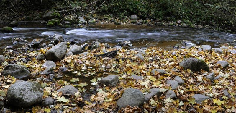 Panorama of a wild river stock photos