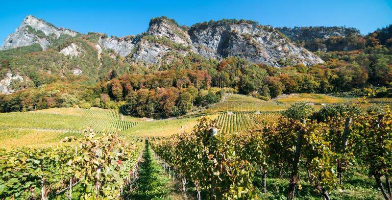Panorama winnica i góra krajobraz w Szwajcarskich Alps w jesieni w spadku barwimy zdjęcie royalty free