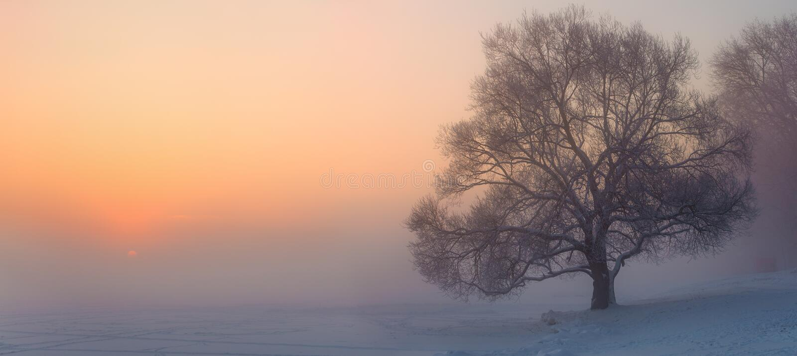 Panorama of winter misty dawn. One tree and sun over horizon. Winter landscape stock images