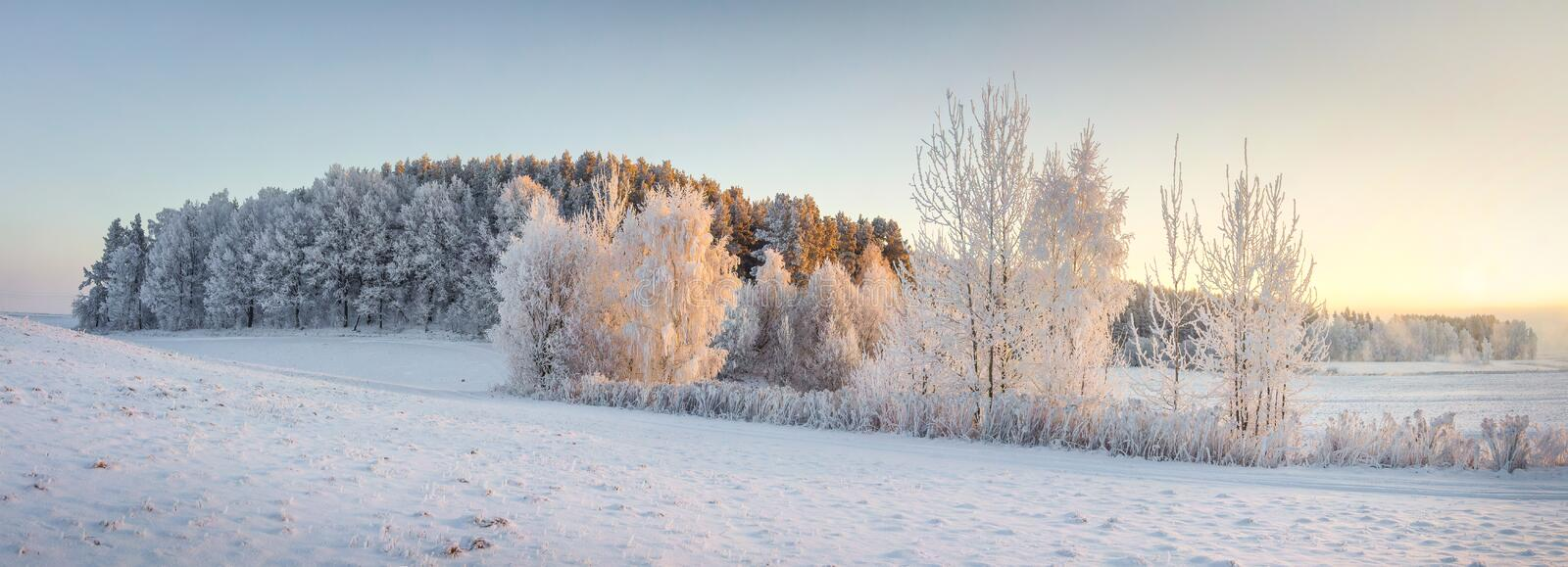 Panorama of winter nature landscape. Panoramic view on frosty trees on snowy meadow in morning with warm yellow sunlight. Christmas background. Xmas time royalty free stock photography