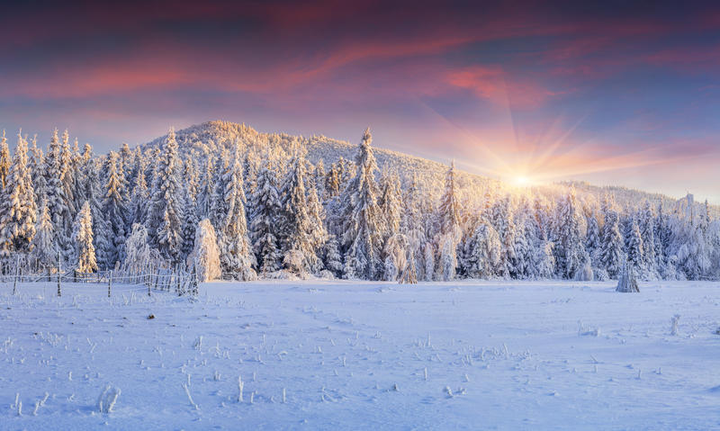 Panorama of the winter sunrise in the mountains stock photos