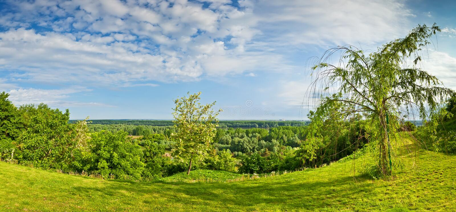 Panorama of woods around the Danube River in Ilok. Beautiful panoramic view at the trees in the wood by the Danube river in the spring, from the city of Ilok stock photo