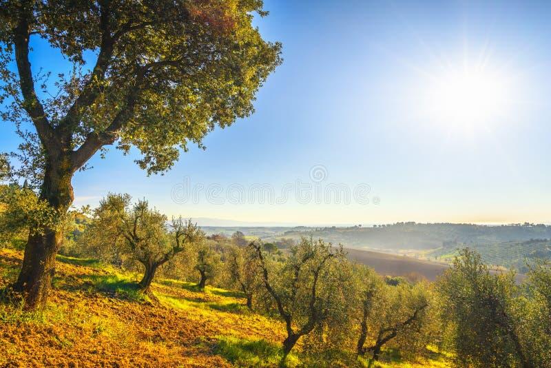 Panorama y olivos del campo de Maremma Casale Marittimo, Pisa, Toscana Italia imagenes de archivo