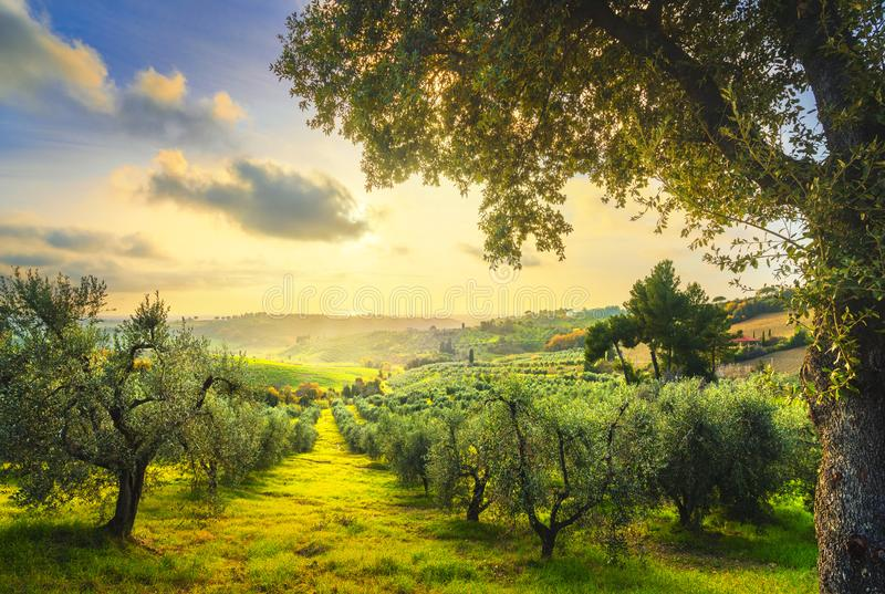 Panorama y olivos del campo de Maremma en puesta del sol Casale Marittimo, Pisa, Toscana Italia fotos de archivo
