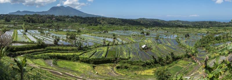 Panorama y volcán de los campos del arroz imágenes de archivo libres de regalías