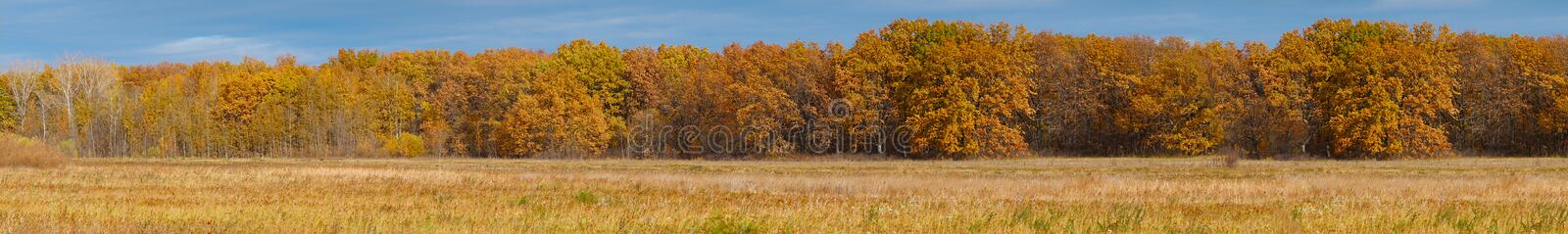 Panorama of the yellow autumn forest in front of meadow royalty free stock image