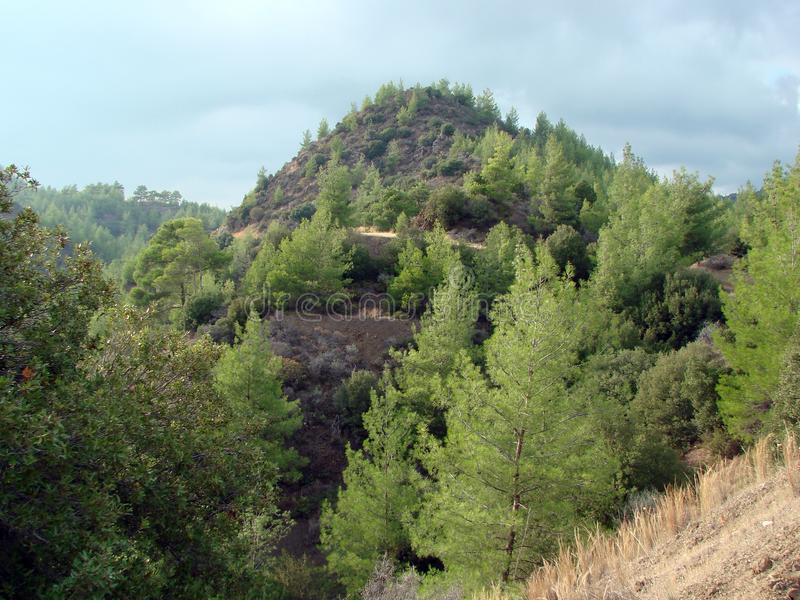 Mount Troodos at an altitude of 900 m above sea level. Cyprus. Forest landscapes on the slopes of the mountain ranges. Panorama of young trees of a mountain stock image