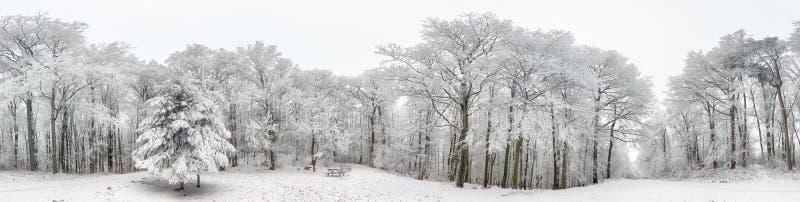 Panorama zima las z śniegiem i drzewem zdjęcie royalty free