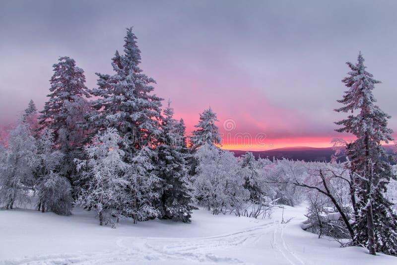 Panorama zmierzch w zima lesie w polanie z narciarskim śladem obrazy royalty free