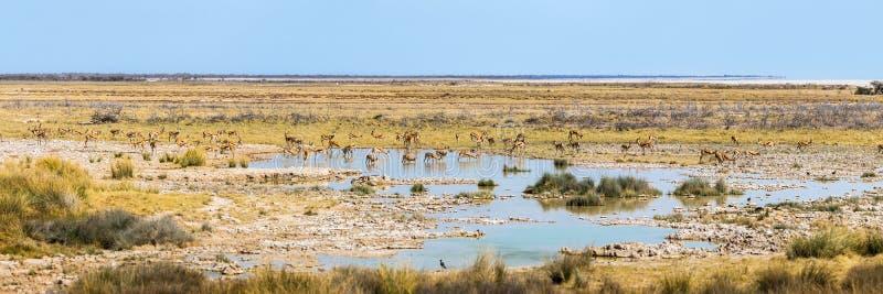 Panoramaansicht von Charitsaub-waterhole, Nationalpark Etosha lizenzfreies stockbild