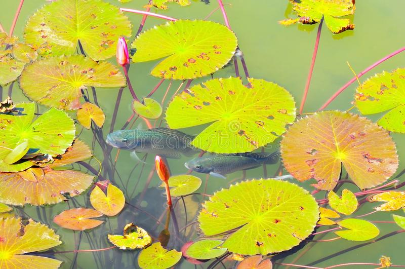 Panoramaansicht von verziertem Teich stockfotos