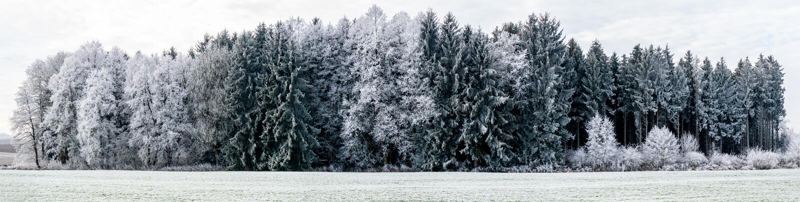 Panoramabeeld van de winterlandschap met nadruk op bos royalty-vrije stock afbeelding