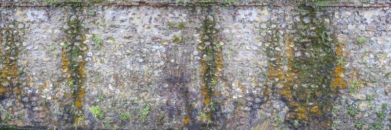 Panoramabild einer Decorativeold-Feuersteinwand mit grünem und gelbem Gemüsemoos lizenzfreies stockbild