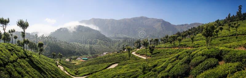 Panoramablick der grünen üppigen Teehügel und -berge um Munnar, Kerala, Indien lizenzfreies stockfoto