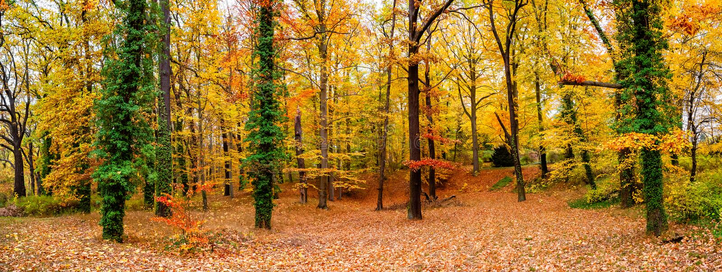 Panoramablick des Laubwaldes am goldenen Herbst in Deutschland, lizenzfreies stockbild