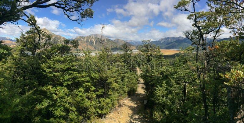 Panoramablick des Regenwaldes der südlichen Buche in den südlichen Alpen in Neuseeland stockfotografie
