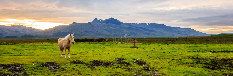 Panoramablick eines schönen hellbraunen Pferds in der landwirtschaftlichen Landschaft in der Dämmerung mit Gebirgszug als Hinterg lizenzfreies stockfoto