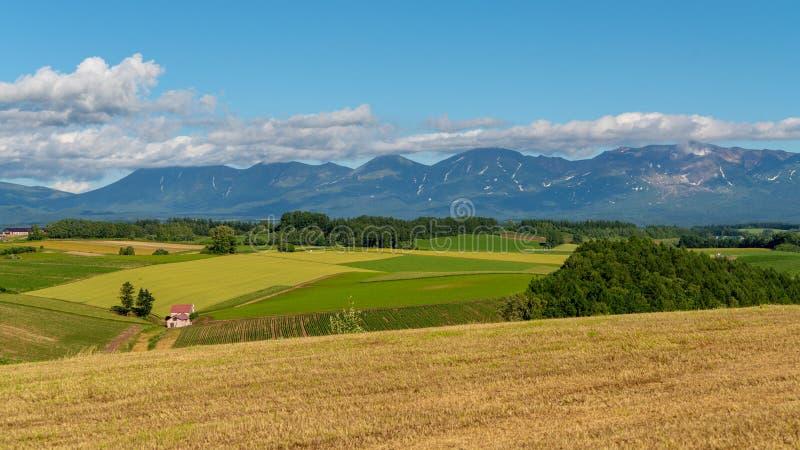 Panoramablick goldenen Reisfeld patchroad in Biei lizenzfreies stockbild