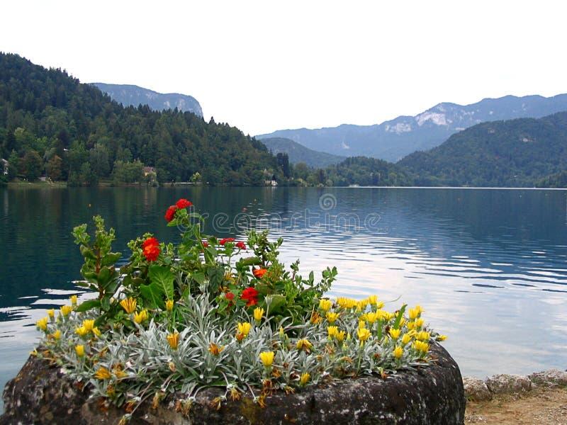 Panoramablick von ausgeblutetem See, Slowenien stockfotos