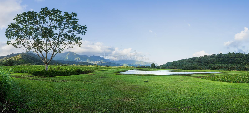 Panoramablick von Hanalei-Tal in Kauai lizenzfreies stockbild