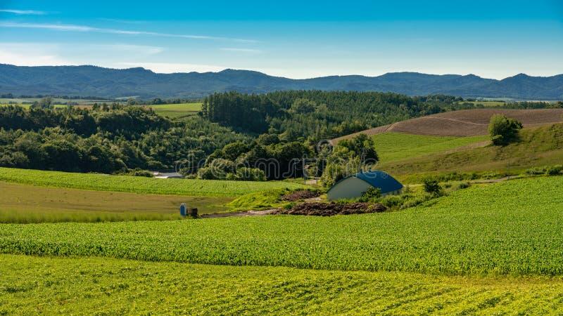 Panoramablick von patchroad in Biei mit einem Bauernhaus lizenzfreies stockbild