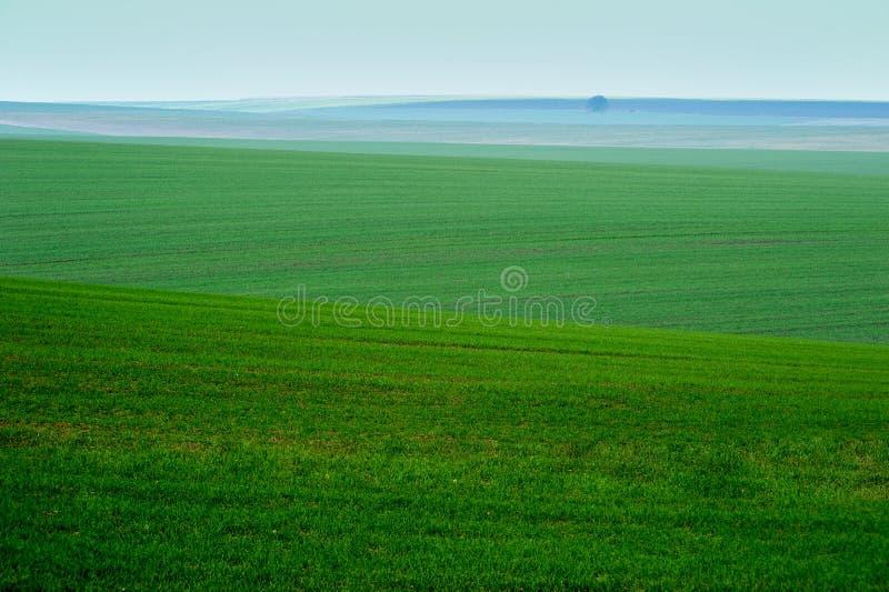 Panoramablick von schönen agicultural Feldern und von Schotterweg lizenzfreie stockfotografie