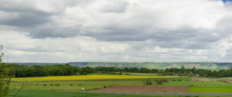 Panoramafoto der Wiese stockfotografie