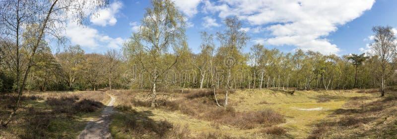 Panoramafoto eines offenen Gebiets mit Gras, Heath-Anlagen und Suppengrün im Hyazinthenwald färbt im Frühjahr im Park Ockenb stockfotografie