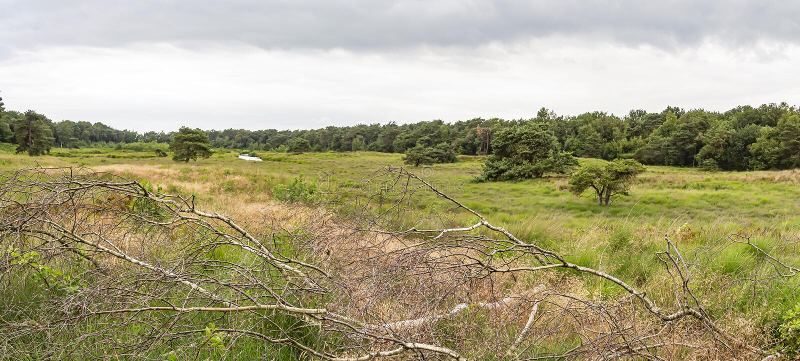 Panoramafoto während eines bewölkten Tages des Feldes 'Patersmoer 'nahe Strijbeek, die Niederlande stockfotos