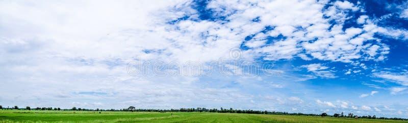 Panoramalandschaft Schöner erneuernder bewölkter Himmel und leeren Feldfülle mit grünem Reisfeld im Nachmittagssonnenlicht lizenzfreie stockbilder