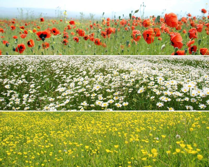 Panoramas da flor imagens de stock