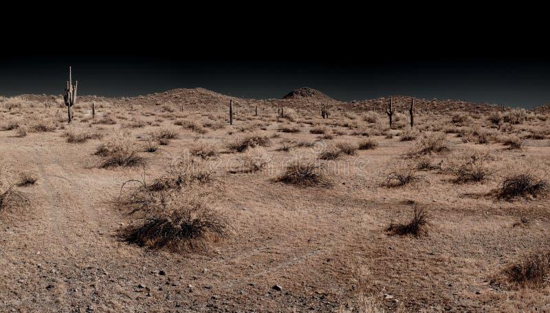 panoramasaguaro royaltyfri fotografi