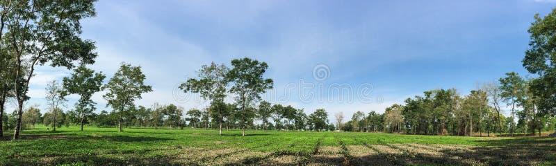 Panoramasikt av gräsplanfält i Daklak, Vietnam royaltyfri bild