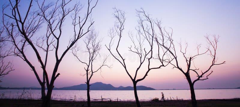 Panoramasikt, en fridsam lakeside på solnedgången, oidentifierad man som går i som fodras av avlövade trädstammar Abstrakt form a arkivfoto