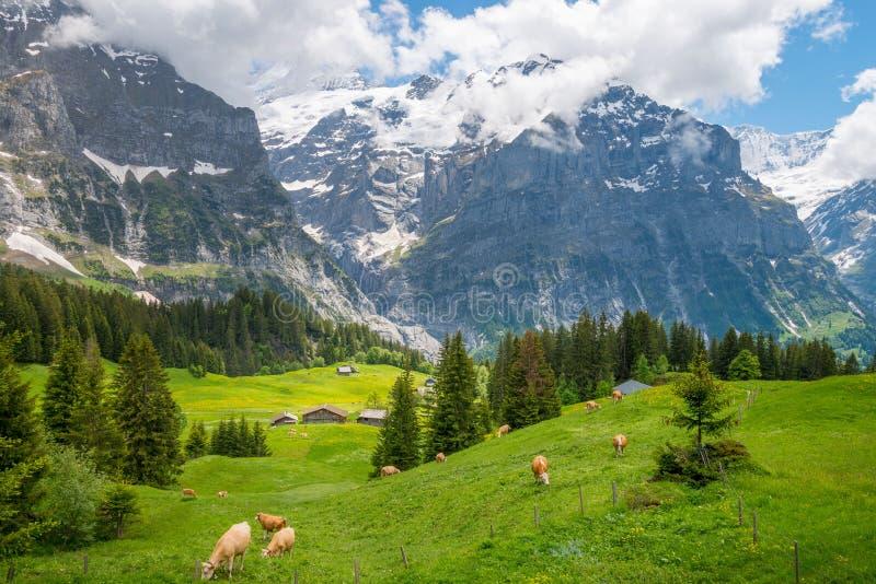 Panoramasikt på berg Eiger och Mattenberg royaltyfria foton