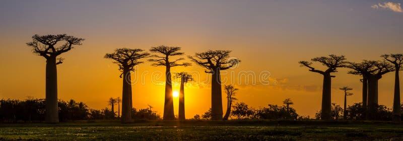 Panoramasikt på solnedgången ovanför Baobabaveny royaltyfri fotografi