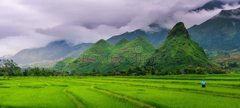 Panoramaszene von Reisfeldern und -terrasse auf Tageslichtsonnenschutz a lizenzfreie stockfotografie