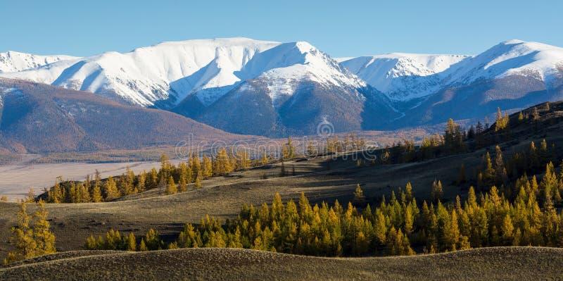 Panoramautsikt av bergen av den Altai-Chuya kanten, västra Sibirien royaltyfri fotografi