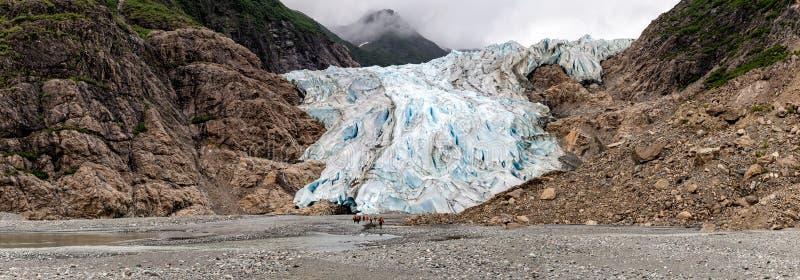 Panoramautsikt av Davidson Glacier i Alaska royaltyfria foton