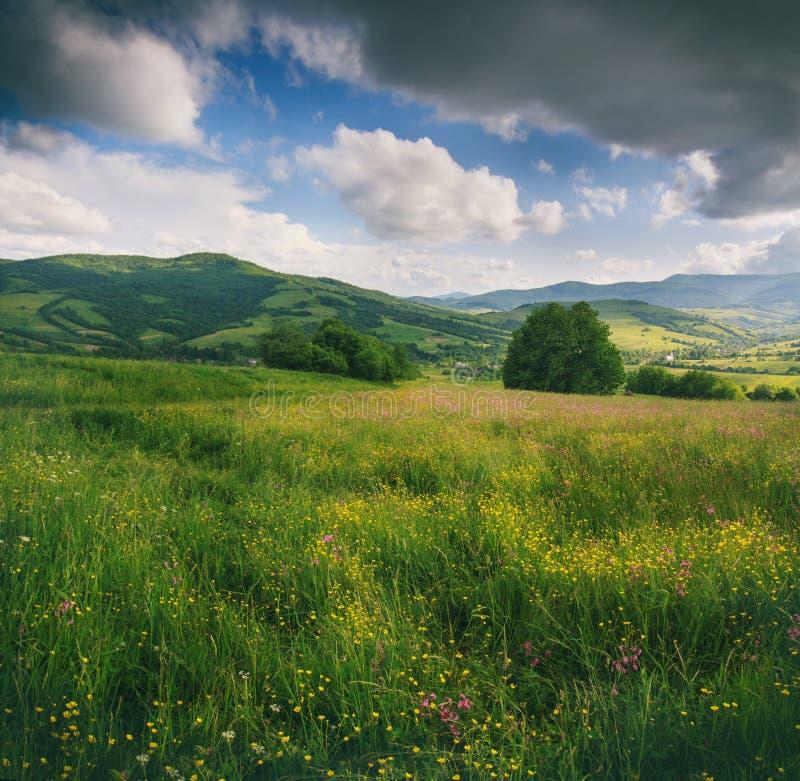 Panoramautsikt av de blomma blommorna, sommarängen i bergen och blå molnig himmel arkivbilder