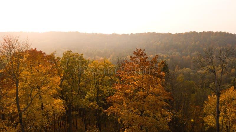 Panoramautsikt av deljusa gula träden och solljuset för höst i himlen Ogenomskinlighet lite dimma Härlig ljus guld- au fotografering för bildbyråer
