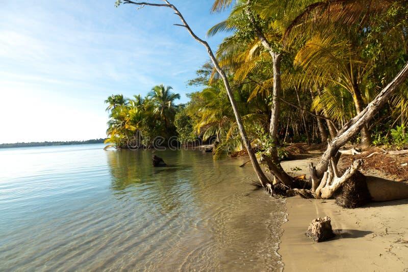 Panoramautsikt av den Boca deltoro stranden arkivbild
