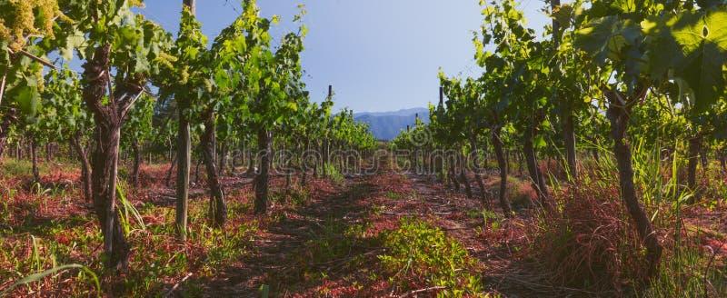 Panoramautsikt av den chilenska vingården chilensk liggande arkivfoto