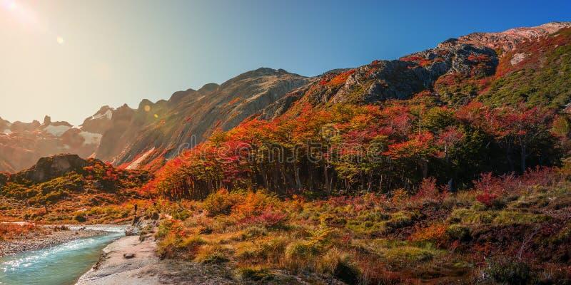 Panoramautsikt av den magiska färgrika sagaskogen på Tierra del Fuego National Park under direkt solljus, Patagonia, Argentina royaltyfri fotografi