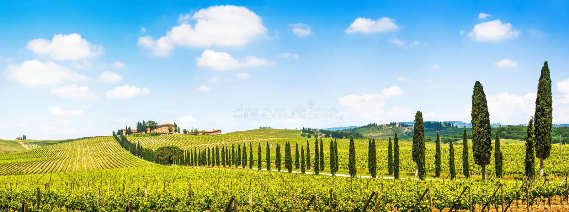 Panoramautsikt av det sceniska Tuscany landskapet med vingården i Chiantiregionen, Tuscany, Italien arkivfoton