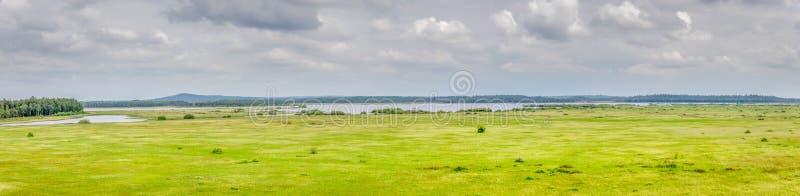 Panoramautsikt av en liten fågelsjö i Sverige royaltyfri fotografi
