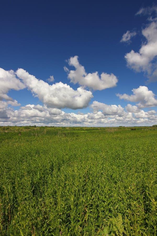 Panoramautsikt av fältet med tjockt gräs och horisonten med moln i himlen royaltyfria bilder
