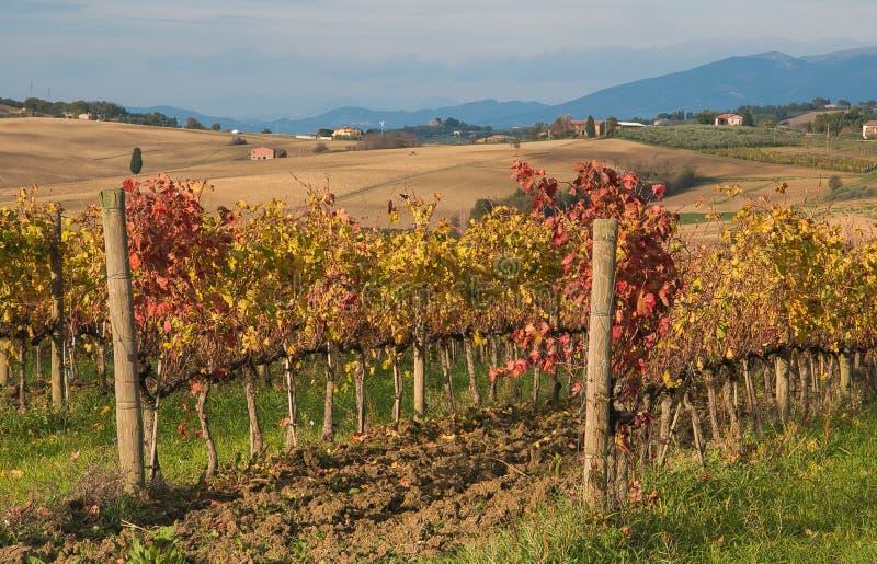 Panoramautsikt av höstliga vingårdar i Umbria arkivfoto