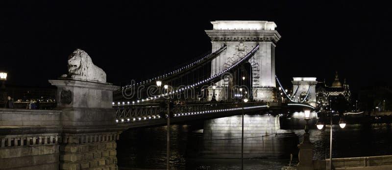 Panoramautsikt av kedjebron på natten i Budapest med lejonen i förgrunden, Ungern arkivbilder
