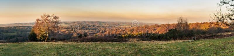 Panoramautsikt av solnedgången över den Ashdown skogen i Sussex, England, UK på en afton i vinter, med ett träd som tänds upp av  arkivbilder
